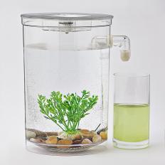 Aquarium autonettoyant