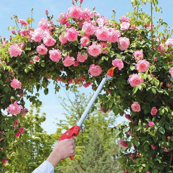 Cisaille de jardin à manche long