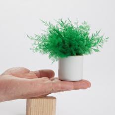 Plante Neptune anti-moustiques Lot de 3 -2
