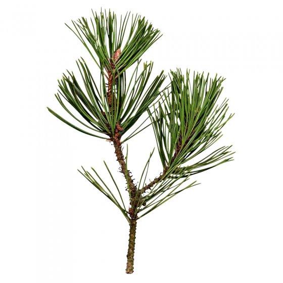 Savon au goudron de pin Lot de 3