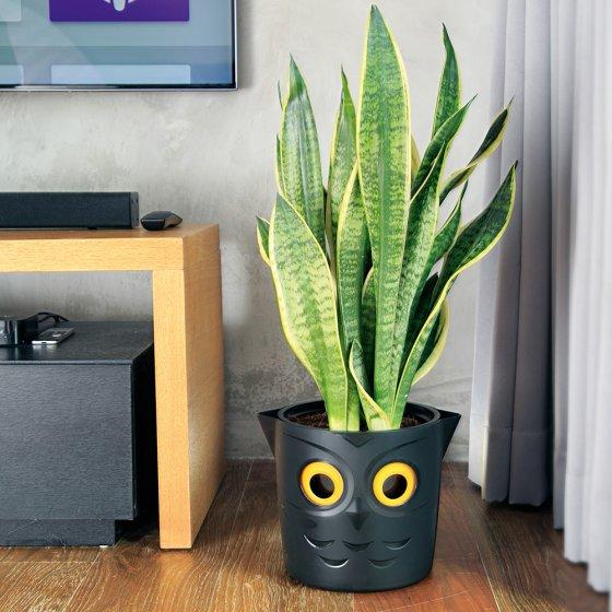 Pot de fleurs avec indicateur d'arrosage